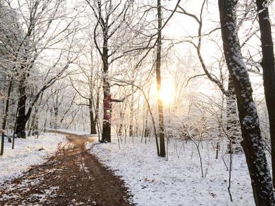 Sonnenaufgang im schneebedeckten Wald
