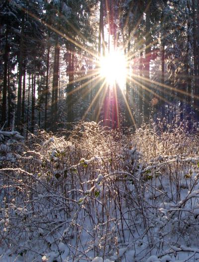 Sonnenstrahlen im verschneiten Wald